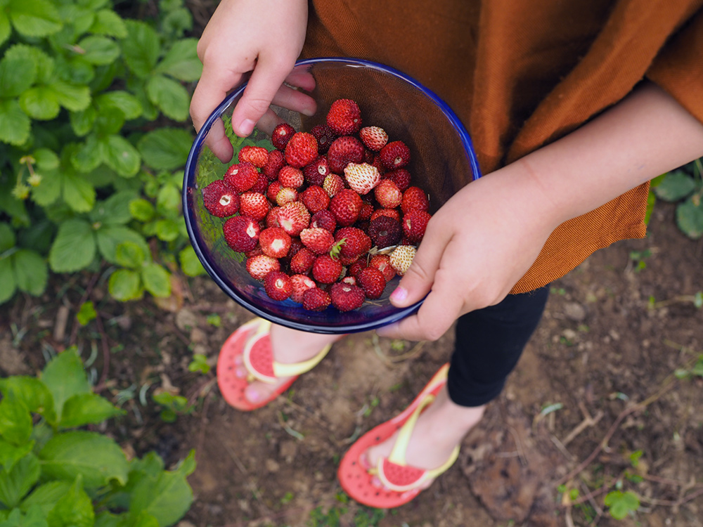 mamimone-fraises-sauvages