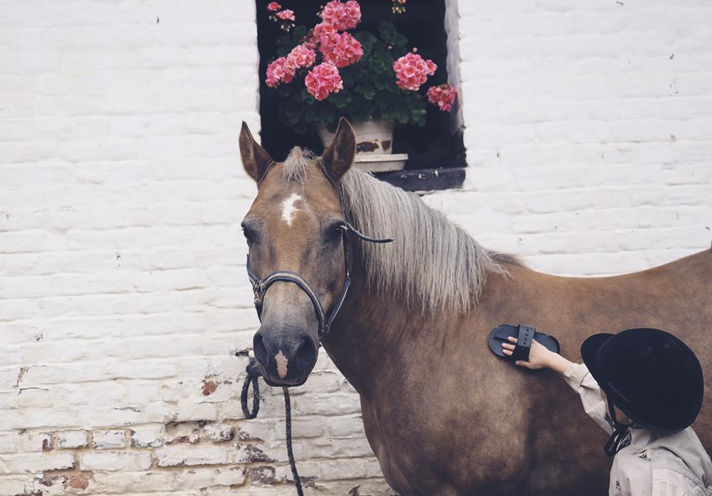 a-cheval-minireyve