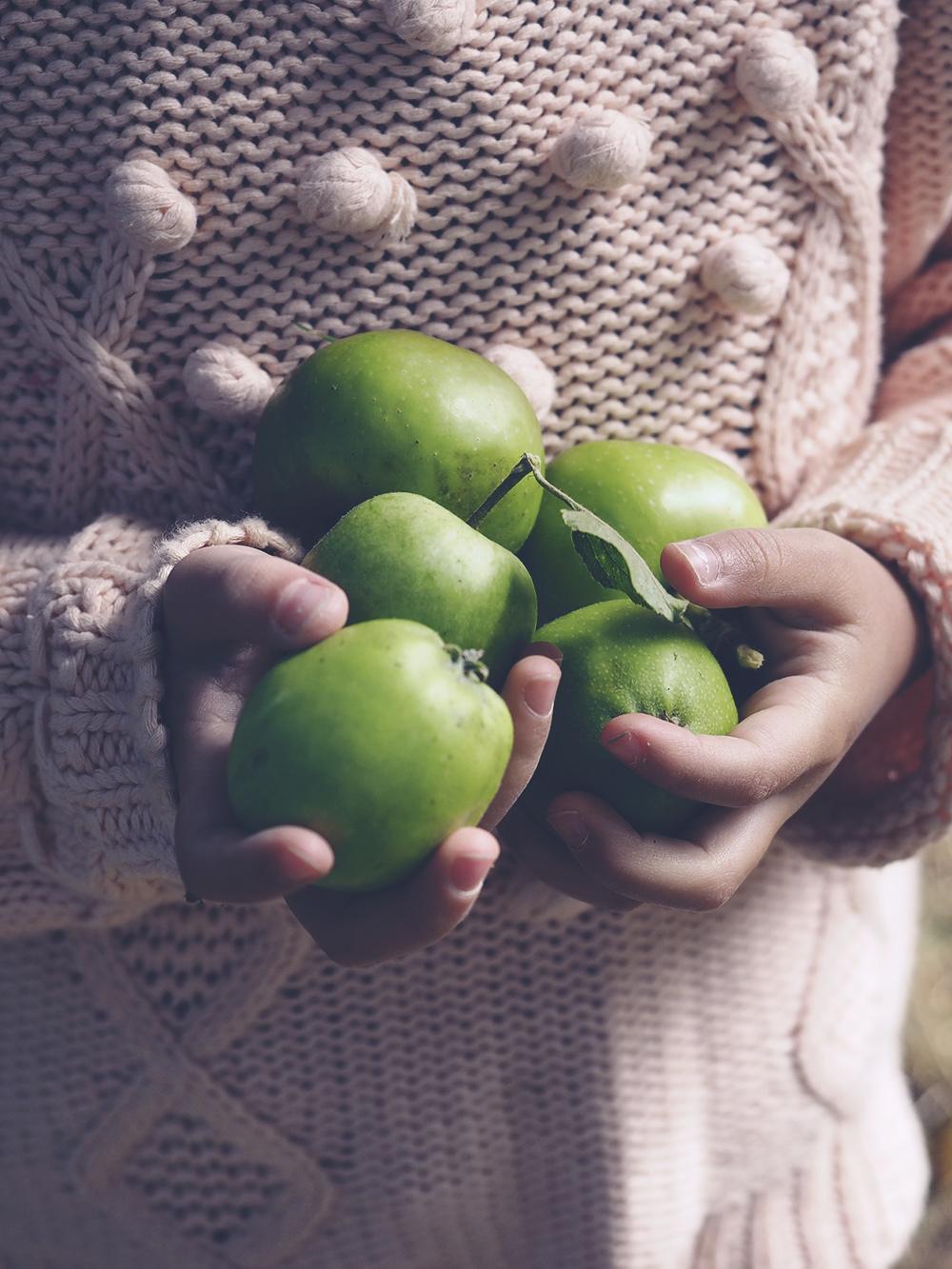 cueillette-pommes