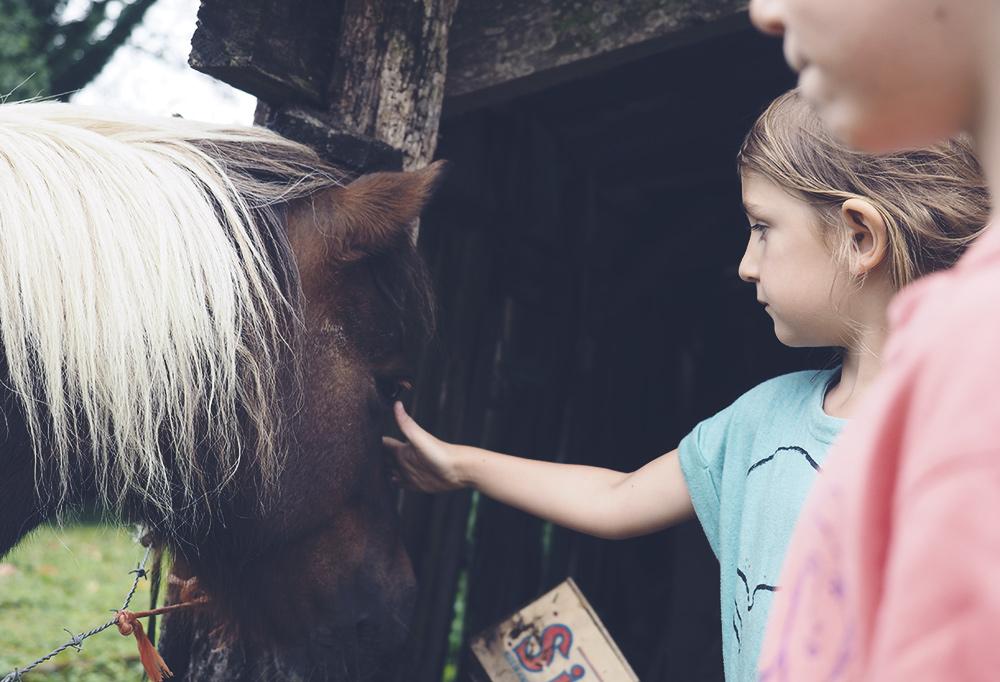 poney-caresse-mamimone
