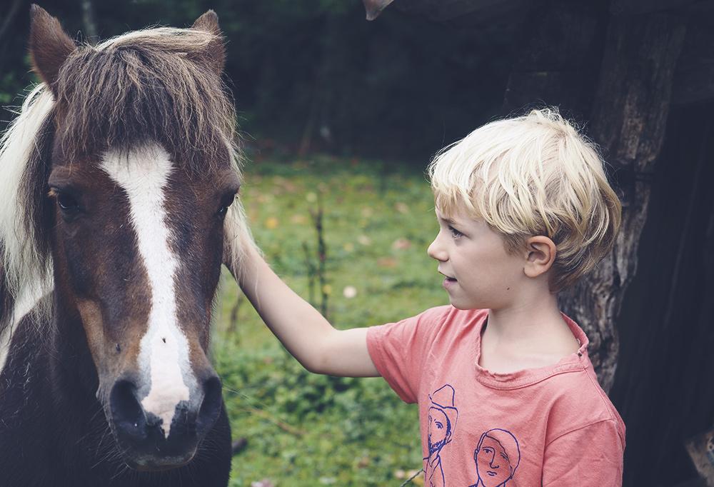 poney-caresse